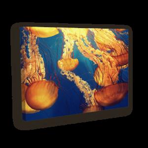 بوم کنواس عروس دریایی